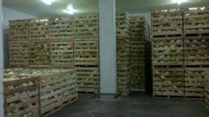 склад хранения овощей